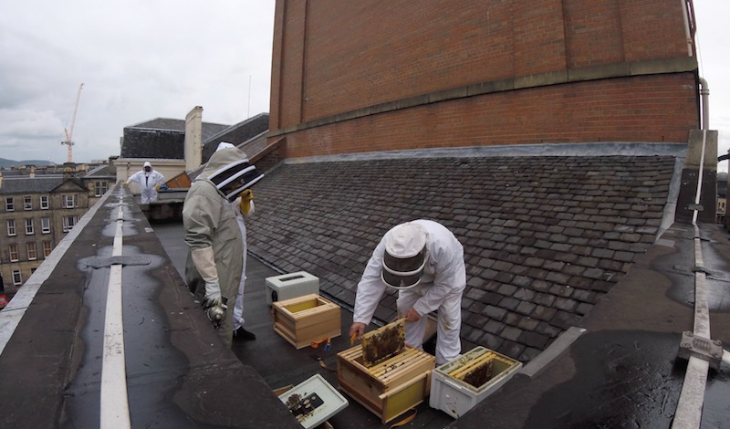 Brian Pool moves the hives in. Pic Royal Lyceum